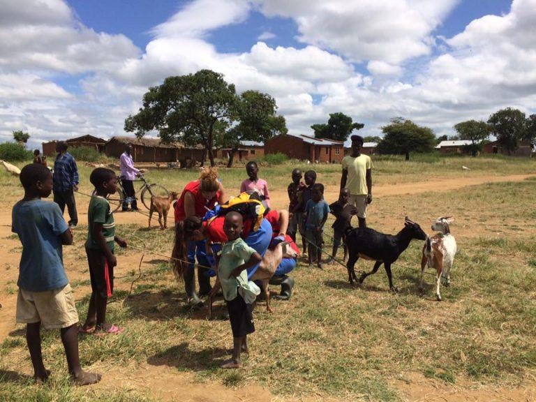 Vets for Africa: Mejora de la nutrición a través de la mejora de la ganadería en Malawi.